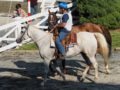 Whitey leads Knute (avatarsound) Tags: boston suffolkdowns horse horseracing jockey race racetrack racing