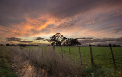 Surrounded (zebedee1971) Tags: tree farmland farm fence sunrise clouds dawn orange trees grass reflection ditch drain green sky hamilton waikato dairy