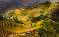 Rice Terrace Fields (trai_thang1211) Tags: taybac vietnam ruongbacthan