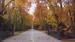 Paseo central de Campo Grande. (lumog37) Tags: park parque gardens paseo promenade jardines