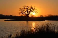 Winter Sunrise. Rushey Common (chris_o_hughes) Tags: winter sunrise december common windrush rushey chrishughesnoggin lwvp