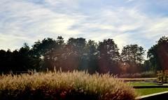 Autumn Vacation (farmspeedracer) Tags: park autumn sky tree fall germany woods october wind silence