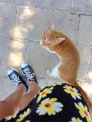 Akko, Israel (ghost collections) Tags: street old city portrait orange cats cute girl daisies cat self israel ginger kitten kitty skirt converse daisy stray chucks acre akko
