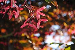 Autumn Colours at Seepark (katrinalbaum) Tags: autumn autumncolours freiburg seepark