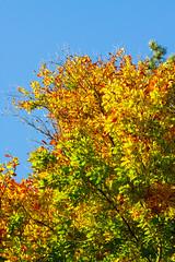 Beech at Autumn (Akito-X) Tags: brown green nature colors yellow 50mm natur gelb grn braun beech farben autunm buche
