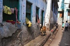 Street view with goat (Dick Verton ( more than 13.000.000 visitors )) Tags: travel blue india children asia goat streetlife varanasi streetview streetshot dickverton
