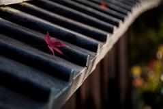 20141123_01_momiji (jam343) Tags: autumn fall japan leaf kyoto foliage momiji 京都 紅葉 uji 宇治 kawara 松殿山荘
