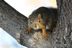 November 8, 2014 - A curious squirrel.  (Bobby H)
