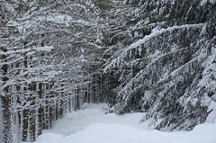 Another world (stuant63) Tags: winter snow ice scotland frozen angus freeze clova cairngormsnationalpark glendoll stuant63 stuartanthony