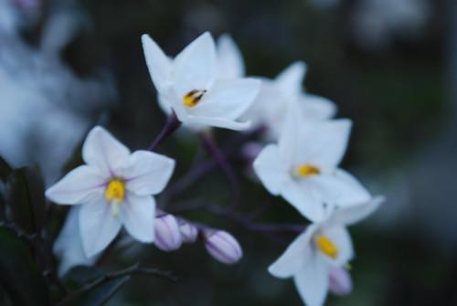 flor (Vagamundos) Tags: