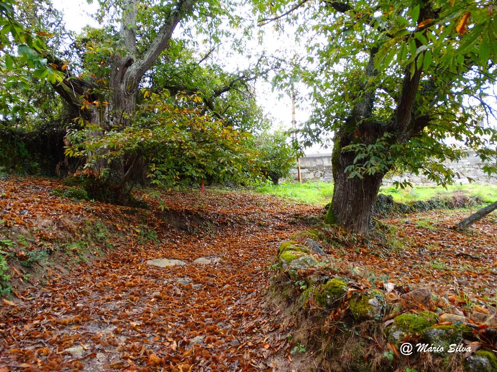 Águas Frias (Chaves) -  ... Cores outonais nos castanheiros e no caminho ...