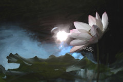 Lotus Flower Paintings / Photographic images using Akvis Oil Paint Filter (Bahman Farzad) Tags: flower lotus drawing paintings drawings walldecor lotusflower oilfilter walldecorations akvis imagebased lotusflowerpainting lotusflowerpaintings lotusfloweroilpaintings lotusfloweroilpainting