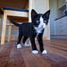 grouchy kitten