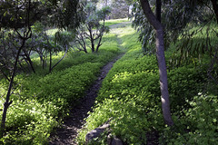 The Narrow Path (Joe Josephs: 2,861,655 views - thank you) Tags: california travel hiking paths californiacoast californiacentralcoast travelphotography landscapephotography outdoorphotography joejosephs joejosephsphotography copyrightjoejosephs fujifilmxt1 copyrightjoejosephs2015 joejosephs2015