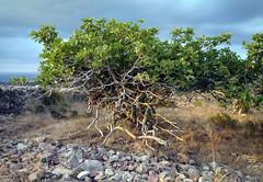 2014.Menorca.Santa agueda 101 (joseluisgildela) Tags: paisajes menorca islasbaleares