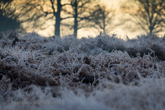 Frozen Ground (4orty7even) Tags: wood morning trees winter light orange brown sunlight white nature yellow sunrise woodland landscape outside countryside early woods frost december branch country trunk ferns 100400mm richmondpark