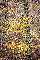 Suspended leaves II (Christos Andronis) Tags: autumn orange nature yellow forest scenic foliage greece balance intimate innerpeace contemplation  landscapephotography thrace       woodlandstrees livaditis    typeofphotography