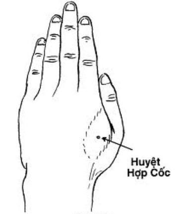 huyethopcoc