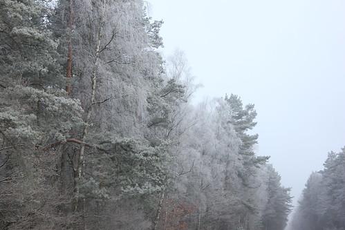 "Im Winterwald mit Schnee 2015 • <a style=""font-size:0.8em;"" href=""http://www.flickr.com/photos/69570948@N04/16153199438/"" target=""_blank"">View on Flickr</a>"