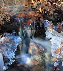 Bartlett Mountain (11) (Nicholas_T) Tags: winter ice creek waterfall stream hiking pennsylvania falls cascades creativecommons wyomingcounty leaflitter headwaters endlessmountains stategameland57 whitebrook stategamelands57 sgl57 bartlettmountain