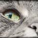 Cat eye - Colorkey