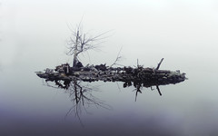 the lonely island. (Asher Isbrucker) Tags: white mist reflection tree nature water fog vancouver island rocks solitude alone centre floating center symmetry minimal float solitary minimalistic centered