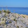 56 (antekatic365) Tags: sea nikon croatia punta rt adriatic hrvatska dalmatia ante planka kras rogoznica katic razanj ražanj ploca d3100