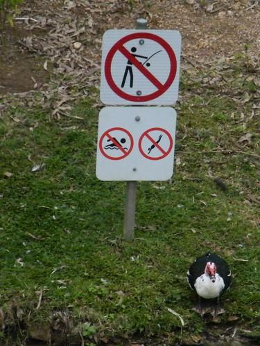 No No No Signs