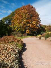 THE HEATHER GARDEN (David~Preston) Tags: uk autumn england tree cheshire seasonal nessbotanicgardens thewirral theheathergarden