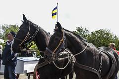 2016-Ameland008 (Trudy Lamers) Tags: wadden ameland eiland paarden reddingsboot reddingsactie