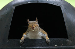 "Chip teeth (5'20"") Tags: park nature trash squirrel wildlife humor potatochips"