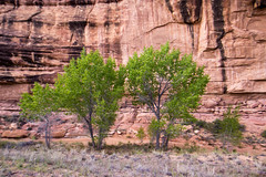 Spring Trees in Lost Canyon, The Needles, Canyonlands N.P., Utah (Apr. 2016) (Thomas Cluderay) Tags: camping nature landscape outside outdoors photography utah desert nps hiking canyon backpacking canyonlands backcountry canyons tcluderayphoto