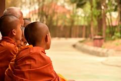 DSC_6575 (Omar Rodriguez Suarez) Tags: children cambodia buddhist nios monks monjes camboya