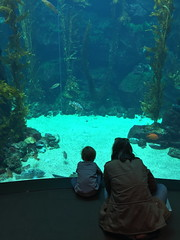 Captive Audience (colonelchi) Tags: ocean california city trip sea fish building water glass animals museum guests swimming swim aquarium la losangeles education downtown gallery underwater tank exploring famous salt culture landmarks free landmark center exhibit science galleries exposition fishtank learning downtownla guest exploration viewing expositionpark exhibits saltwater californiasciencecenter downtownlosangeles freemuseum