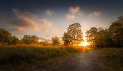 Sefton Sunset (tony.wish) Tags: park uk trees sunset sky cloud sun nature liverpool landscape nikon sundown outdoor path sigma wideangle hdr seftonpark goldenhour d5300