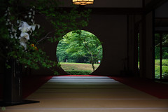 20160528-D7-DS7_3065.jpg (d3_plus) Tags: street sky plant flower building history nature japan temple nikon scenery shrine kamakura daily architectural telephoto bloom  tele streetphoto nikkor   tamron    shintoshrine  buddhisttemple dailyphoto sanctuary 28300mm   thesedays kitakamakura   28300     holyplace historicmonuments tamron28300mm  ancientcity   tamronaf28300mmf3563    a061  architecturalstructure telezoomlens d700  tamronaf28300mmf3563xrdildasphericalif nikond700   a061n
