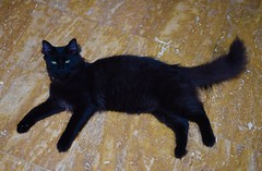 Relaxing Kitty! (ineedathis,The older I get the more fun I have....) Tags: family boy portrait pet animal cat blackcat furry feline floor sweet kitty resting marble adopted ziggy laying hff drzhivago nikond750