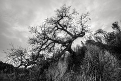 she's got sorcery (Super G) Tags: sky blackandwhite bw tree landscape dramatic animated sorcery