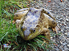 Frog (FotoCheez) Tags: life seattle christmas camera city bridge flowers blue autumn winter light red summer test music dog house lake fish snow cold flower color macro building green bird art fall love ice beach beautiful grass leaves animal fog architecture clouds forest butterfly river garden landscape fun island happy fire coast boat washington leaf spring pretty working prism insects screen hike bugs frog bee honey refraction roll seahawks fx trump cannabis gsd clarklake fotocheez
