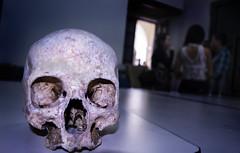 Calavera en sustentacin. (edny1994) Tags: portrait color skull nikon colombia arte bones huesos calavera profundidad d5200