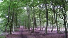 Promenade en fort de Roumare (jeanlouisallix) Tags: roumare montigny rouen seine maritime haute normandie france fort forest sousbois paysages arbres sylviculture panorama nature cosisthme