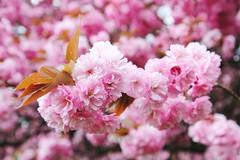 IMG_4559 (Irina Souiki) Tags: parcdesceaux france paris sceaux flowers nature parc park