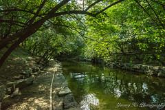 Yuanmingyuan  (mingsquared) Tags: china trees water beautiful creek forest garden landscape nikon scenery beijing relaxing peaceful serene   nikond3200  yuanmingyuan tokinaaf1224mmf4
