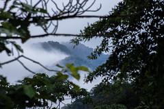 _NGE7811.jpg (Nico_GE) Tags: selvahumedatropical colombia sancipriano pacifico comunidadesafro valledelcauca co