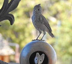 Oak Titmouse with Friend:) (figllano) Tags: elements titmouse bird statue outdoors
