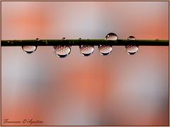 A quadretti (Francesca D'Agostino) Tags: gocce drops acqua water riflessi reflections colori colors
