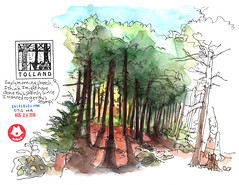 Tolland State Forest Camp Ground (miked*) Tags: tollandstateforest camp ma