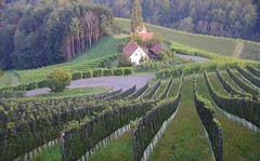 Auf geht`s ins steirische Rebenland ( eulenbilder - berti ) Tags: steiermark sdsteiermark sdsteirischeweinstrase herbst 2016 wein trauben landschaft hgel