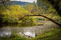 Inchino all' autunno (Roberto Fiscella) Tags: flickrsicilia sicilia sicily stagioni albero alberi autunno robertofiscella riflessi riservacampanito nicosiaenna nikon d7200 wwpw2016