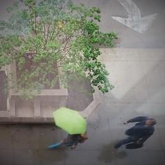 Different (michael.veltman) Tags: looking down rain umbrella green blue tree arrow chicago illinois wacker drive